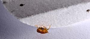 Bed Bug Filter Paper